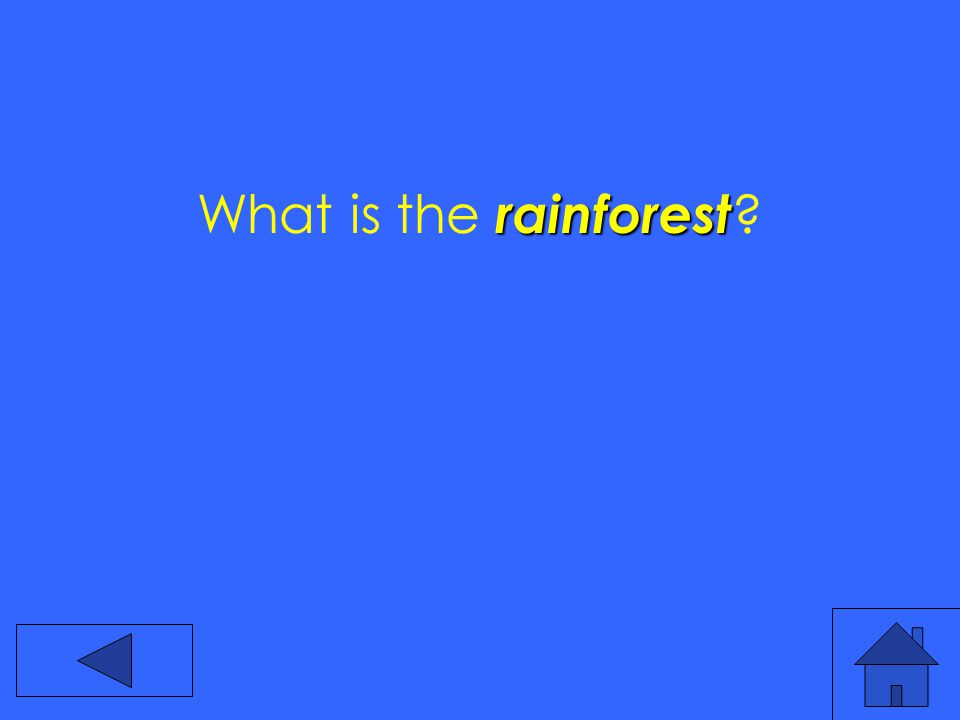rainforest What is the rainforest