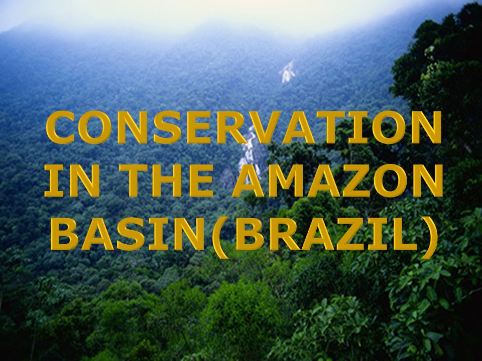 The World's largest rainforest:Amazon is a vast region that reach out to the border of nine rapidly developing countries such as Brazil, Bolivia, Peru, Ecuador, Colombia, Venezuela, Guyana, Suriname and French Guiana, an overseas territory of France.