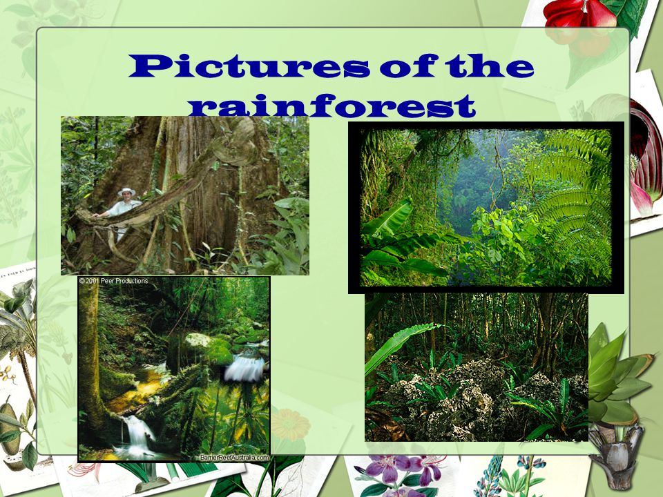Pictures of the rainforest