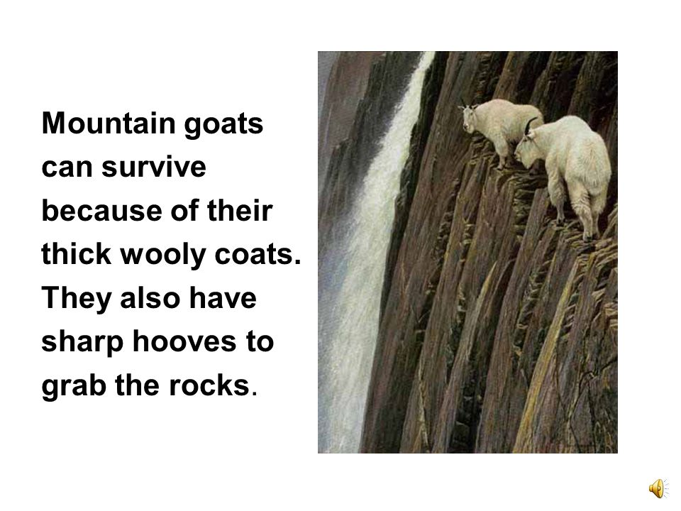 A puma or mountain lion can jump 15 feet straight up a mountain.