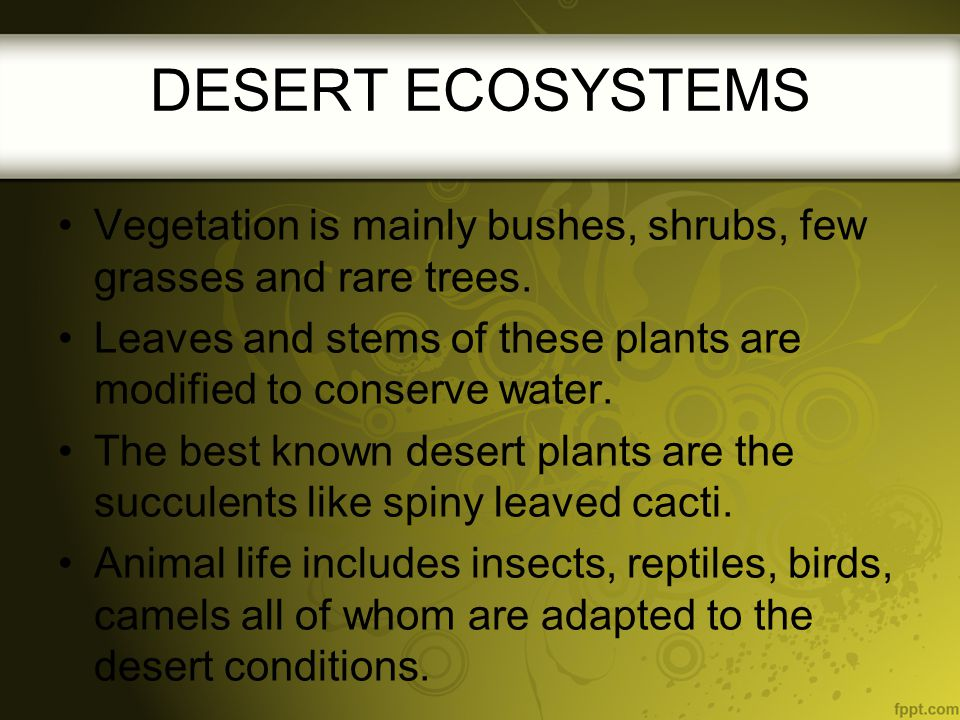 Vegetation is mainly bushes, shrubs, few grasses and rare trees. Leaves and stems of these plants are modified to conserve water. The best known deser