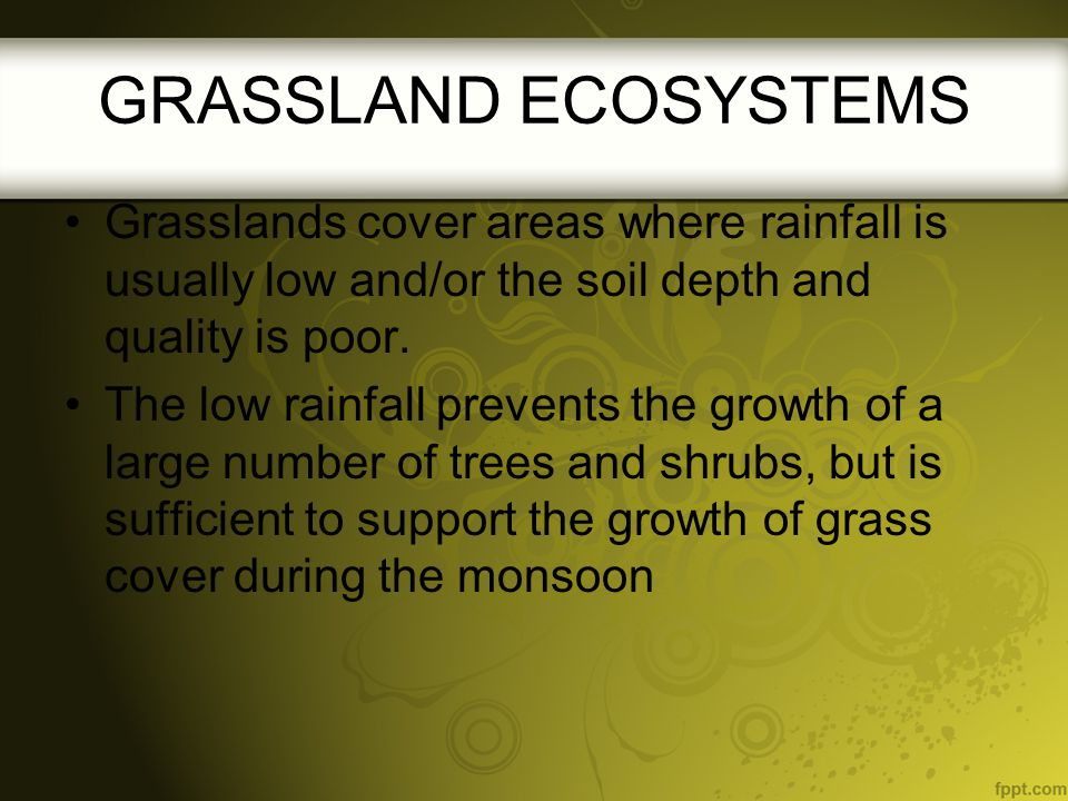 Grasslands cover areas where rainfall is usually low and/or the soil depth and quality is poor. The low rainfall prevents the growth of a large number