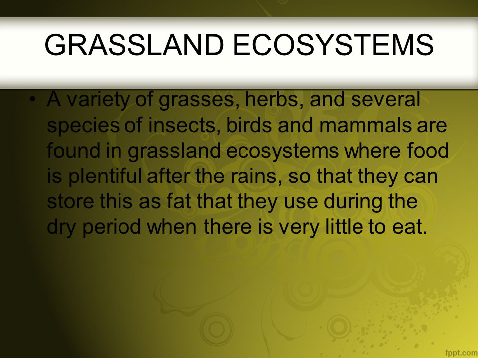 A variety of grasses, herbs, and several species of insects, birds and mammals are found in grassland ecosystems where food is plentiful after the rai