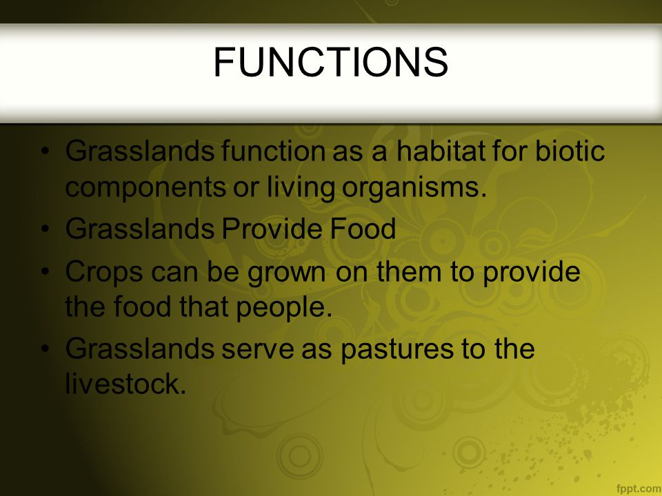 FUNCTIONS Grasslands function as a habitat for biotic components or living organisms. Grasslands Provide Food Crops can be grown on them to provide th