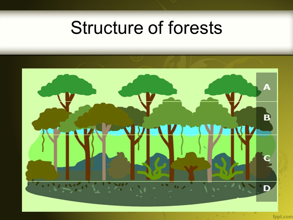 The forest floor – D- is where recycling occurs, fungi, insects, bacteria, and earthworms are among the many organisms that break down waste materials and ready them for reuse and recycling throughout the forest system.