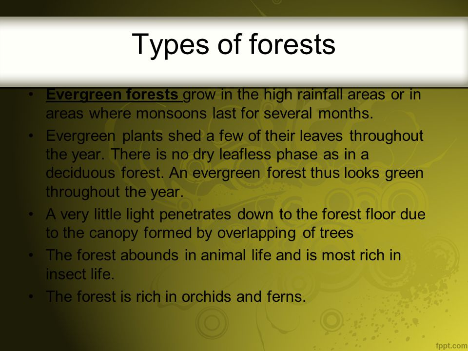 Coniferous Forests grow in places with very cold winters and cool summers.