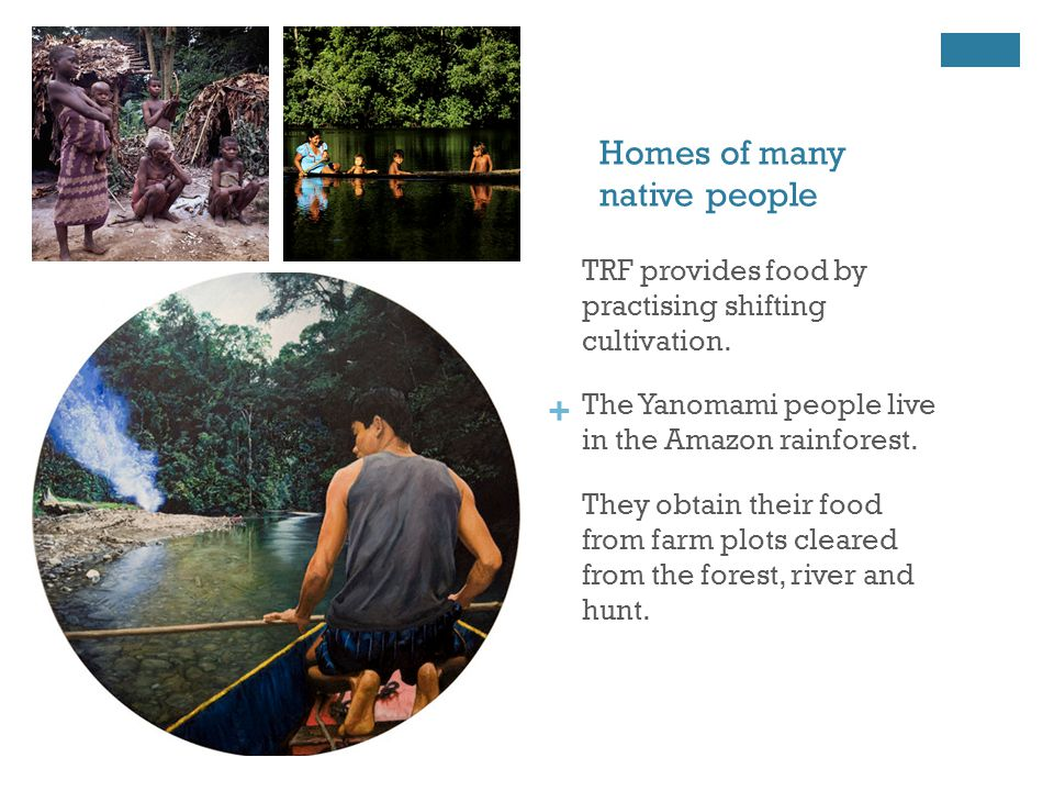 + Homes of many native people TRF provides food by practising shifting cultivation.