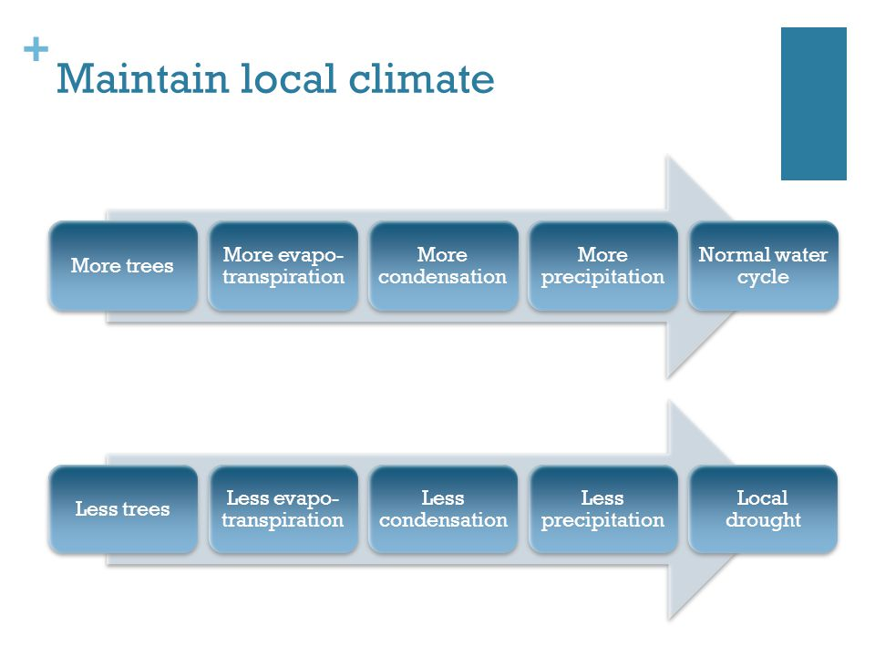 + Maintain local climate More trees More evapo- transpiration More condensation More precipitation Normal water cycle Less trees Less evapo- transpiration Less condensation Less precipitation Local drought