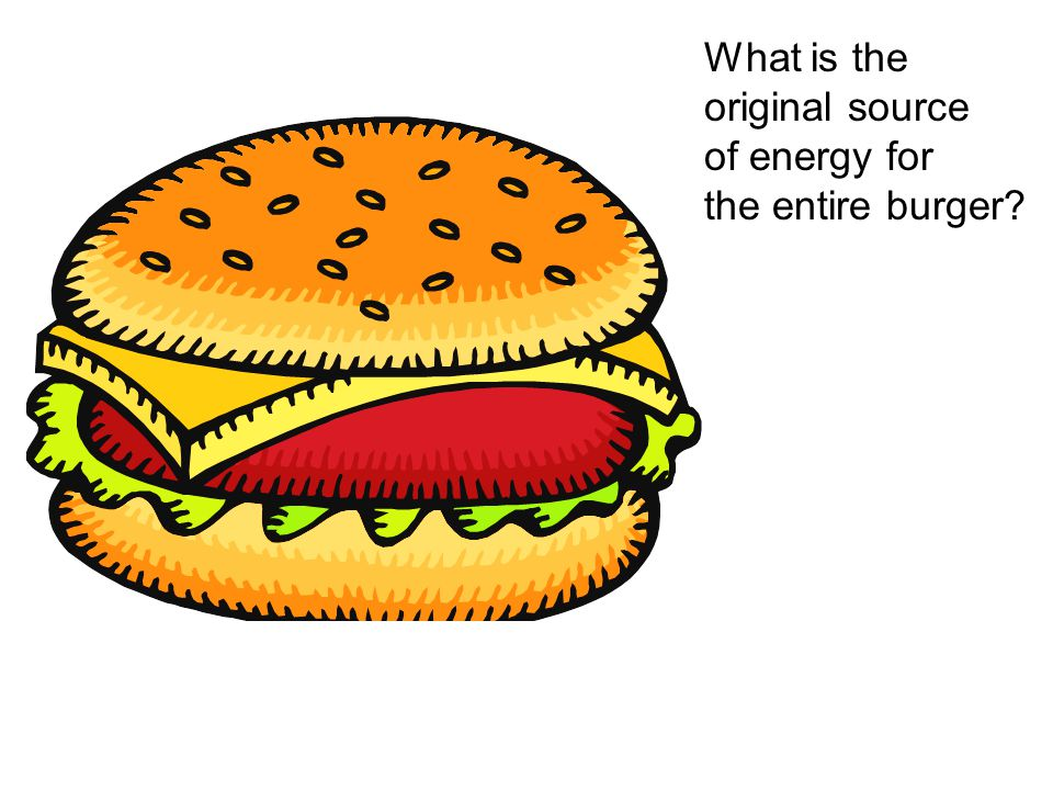 What is the original source of energy for the entire burger?