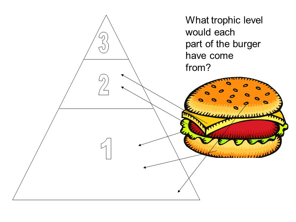 What trophic level would each part of the burger have come from?