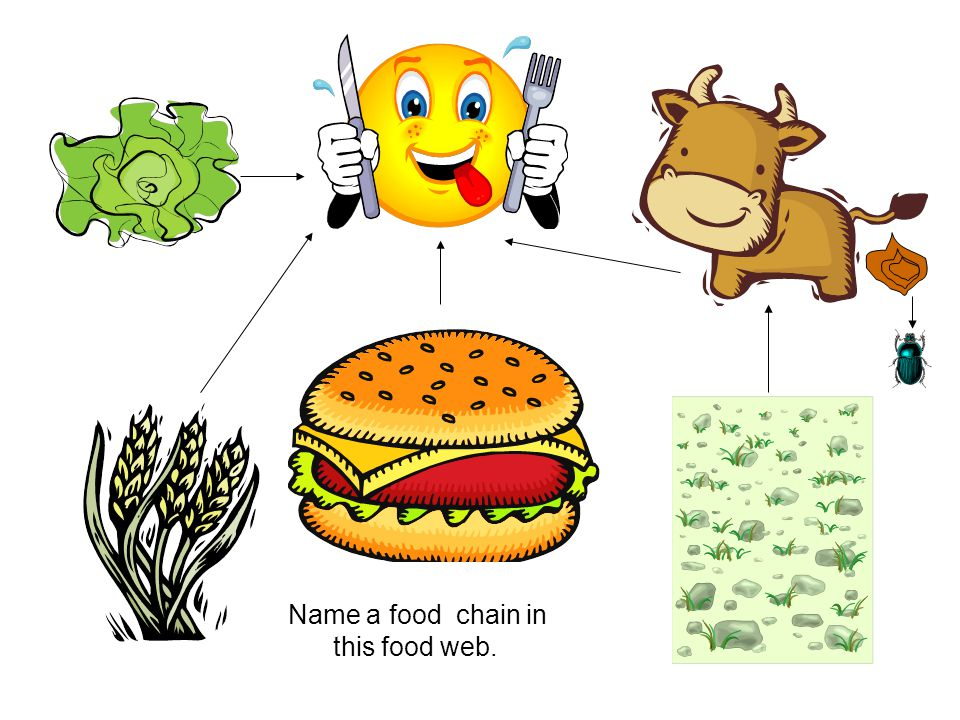 Name a food chain in this food web.