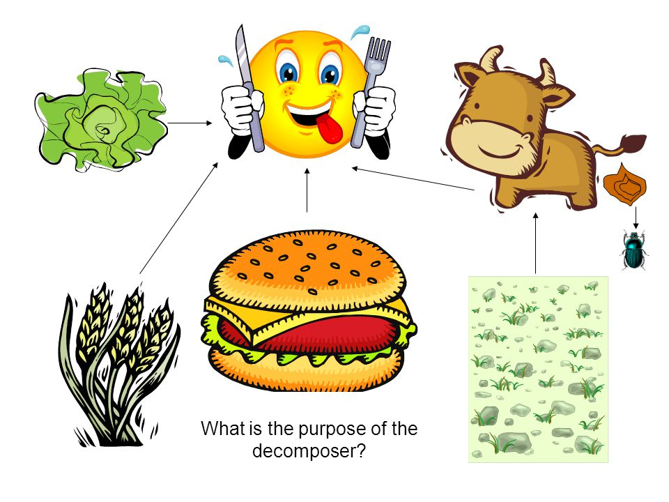 Which organism is the omnivore?