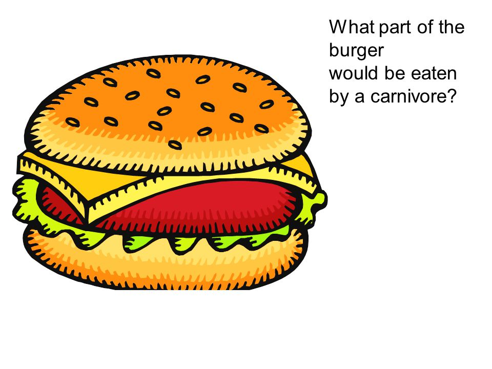 What part of the burger would be eaten by a carnivore?