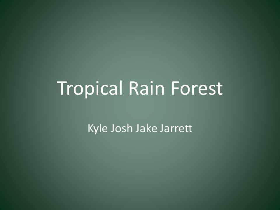 Tropical Rain Forest Kyle Josh Jake Jarrett