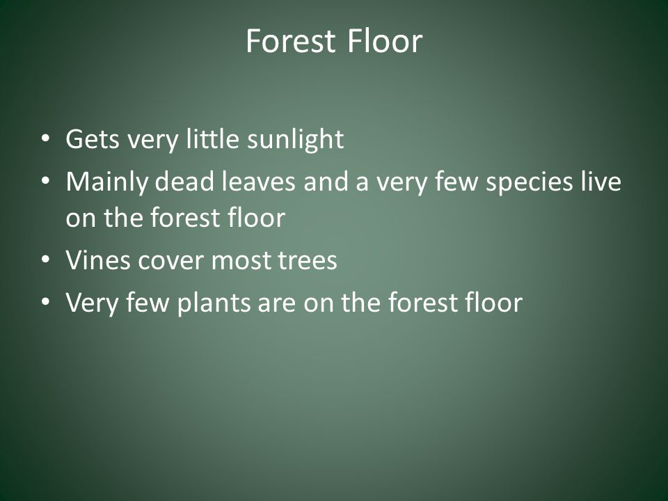 Forest Floor Gets very little sunlight Mainly dead leaves and a very few species live on the forest floor Vines cover most trees Very few plants are o