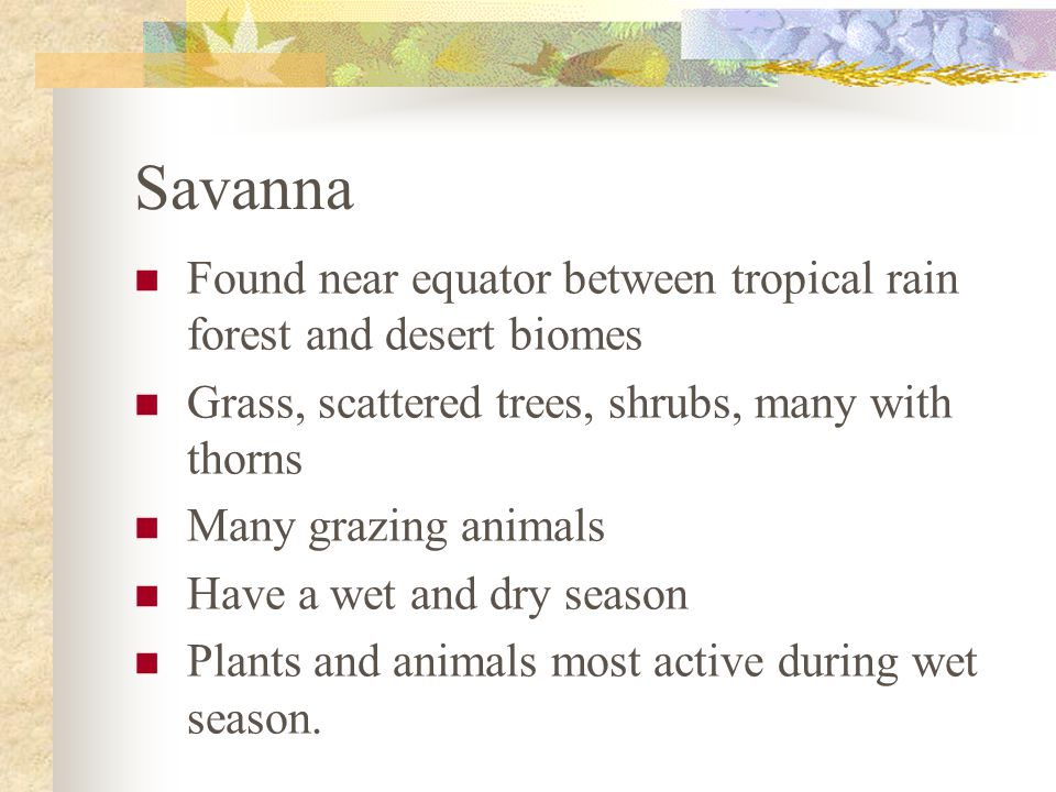 Savanna Found near equator between tropical rain forest and desert biomes Grass, scattered trees, shrubs, many with thorns Many grazing animals Have a