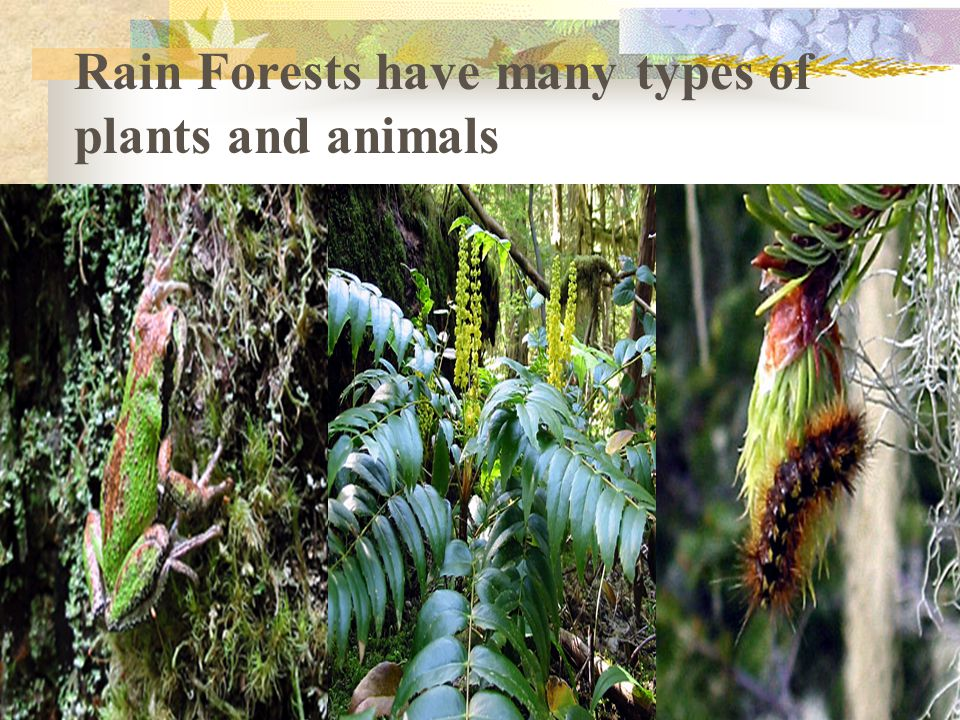 Rain Forests have many types of plants and animals