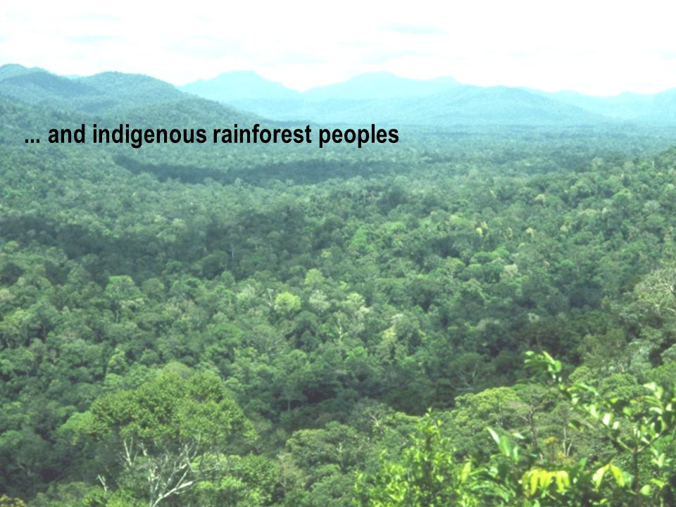 CLIMATE ALLIANCE KLIMA-BÜNDNIS ALIANZA DEL CLIMA e.V.... and indigenous rainforest peoples