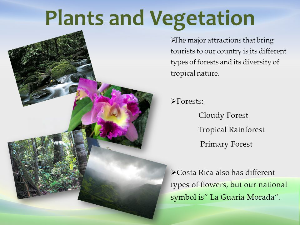 Plants and Vegetation  The major attractions that bring tourists to our country is its different types of forests and its diversity of tropical nature.