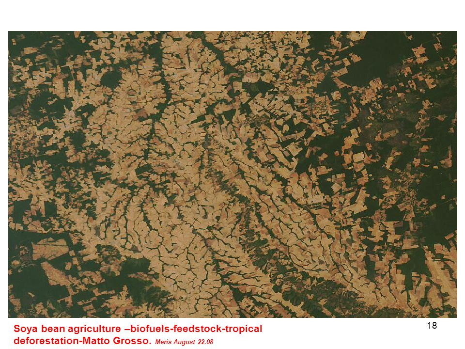 18 Soya bean agriculture –biofuels-feedstock-tropical deforestation-Matto Grosso.