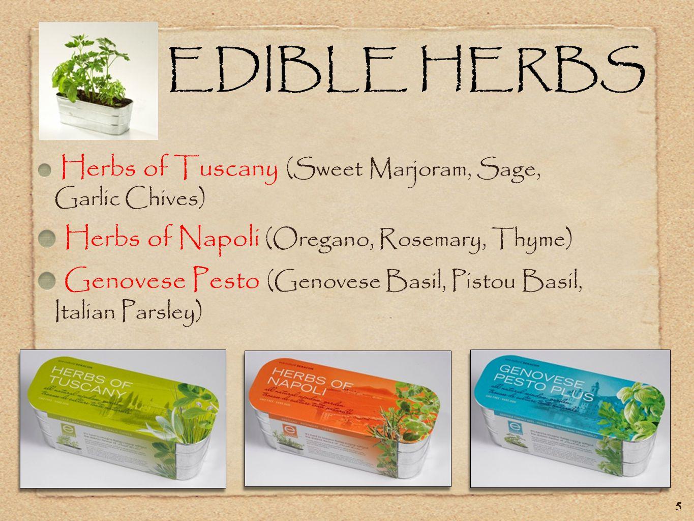 EDIBLE HERBS Herbs of Tuscany (Sweet Marjoram, Sage, Garlic Chives) Herbs of Napoli (Oregano, Rosemary, Thyme) Genovese Pesto (Genovese Basil, Pistou Basil, Italian Parsley) 5