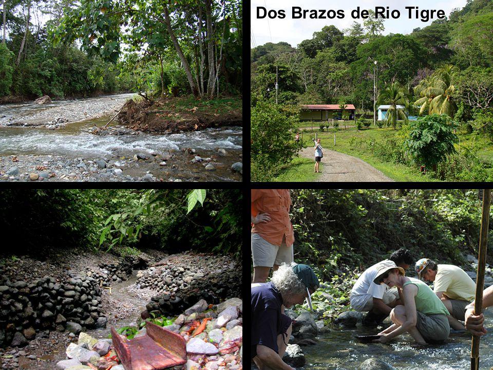 Dos Brazos de Rio Tigre