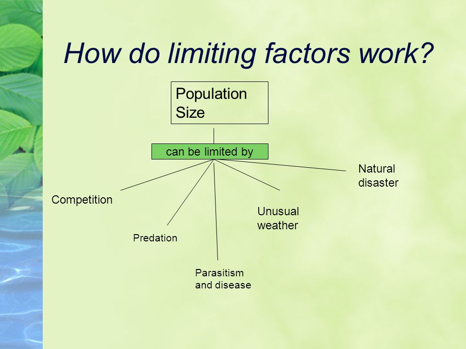How do limiting factors work.