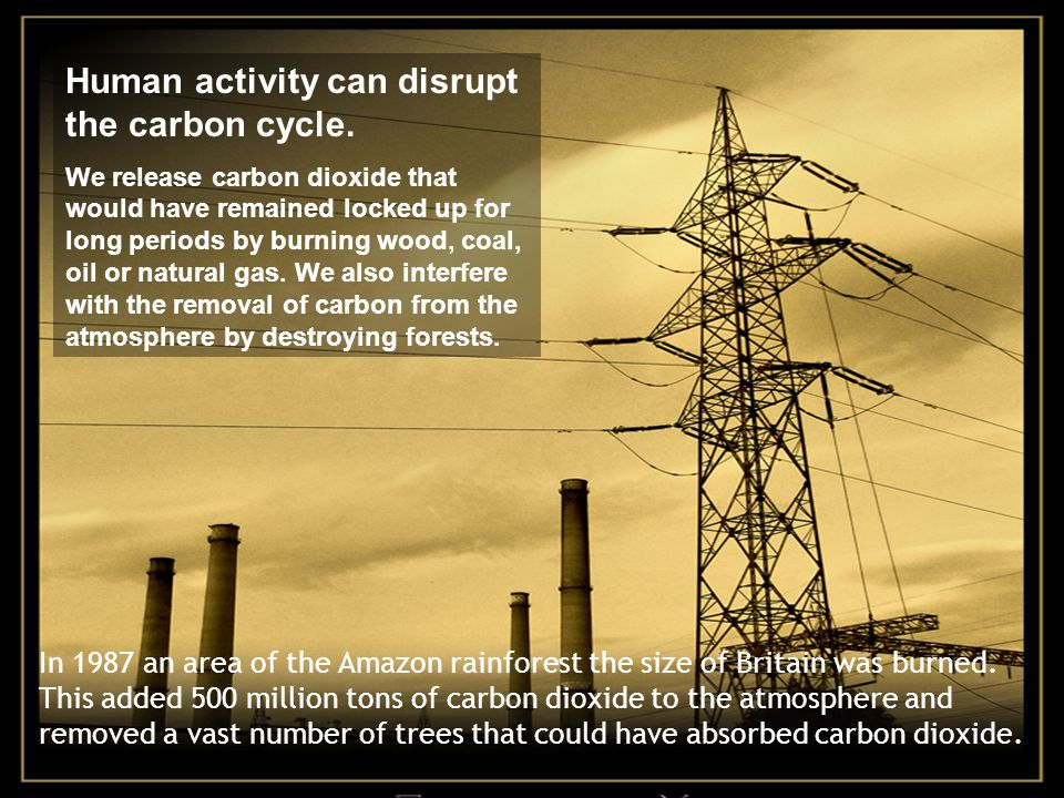 Human activity can disrupt the carbon cycle.