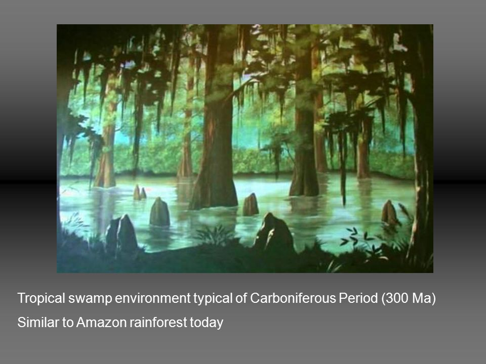 Tropical swamp environment typical of Carboniferous Period (300 Ma) Similar to Amazon rainforest today