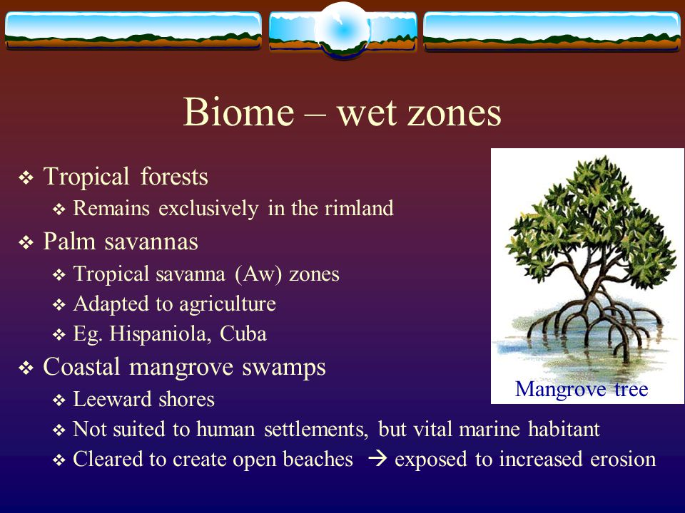 Biome – wet zones  Tropical forests  Remains exclusively in the rimland  Palm savannas  Tropical savanna (Aw) zones  Adapted to agriculture  Eg.