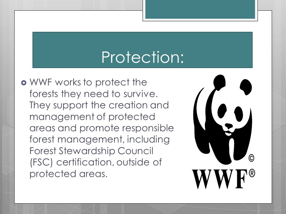 Protection:  WWF works to protect the forests they need to survive.