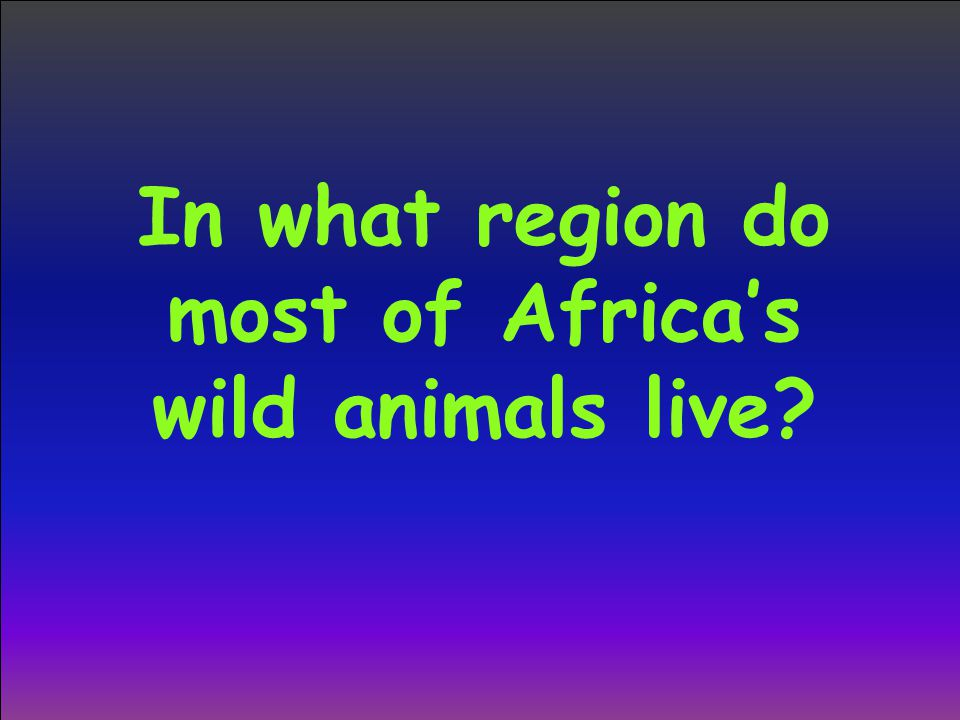 In what region do most of Africa's wild animals live?