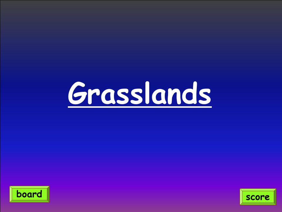 Grasslands score board