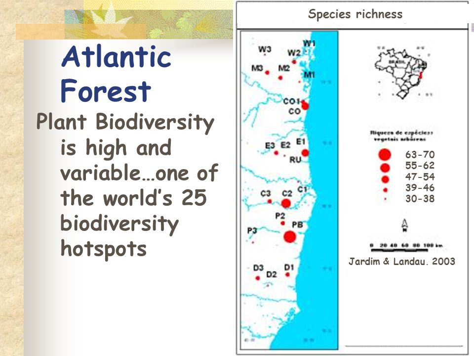 Atlantic Forest Plant Biodiversity is high and variable…one of the world's 25 biodiversity hotspots Jardim & Landau, 2003 Species richness 63-70 55-62