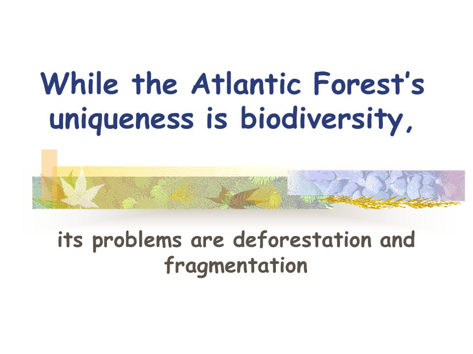 While the Atlantic Forest's uniqueness is biodiversity, its problems are deforestation and fragmentation