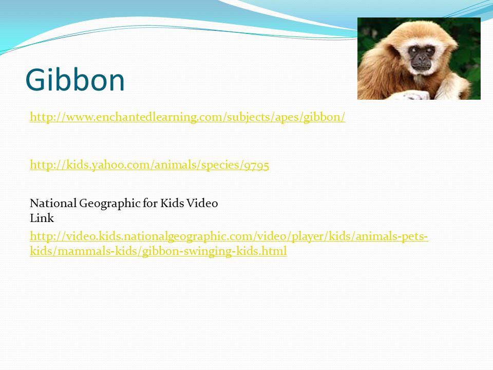 Gibbon http://kids.yahoo.com/animals/species/9795 http://www.enchantedlearning.com/subjects/apes/gibbon/ http://video.kids.nationalgeographic.com/video/player/kids/animals-pets- kids/mammals-kids/gibbon-swinging-kids.html National Geographic for Kids Video Link