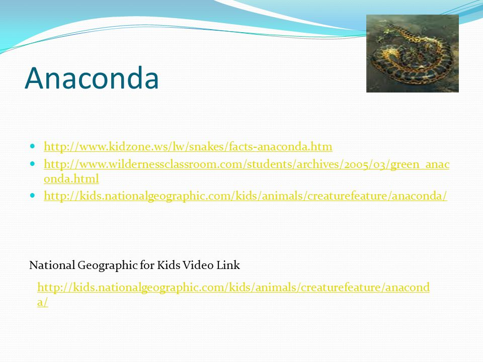 Anaconda http://www.kidzone.ws/lw/snakes/facts-anaconda.htm http://www.wildernessclassroom.com/students/archives/2005/03/green_anac onda.html http://www.wildernessclassroom.com/students/archives/2005/03/green_anac onda.html http://kids.nationalgeographic.com/kids/animals/creaturefeature/anaconda/ National Geographic for Kids Video Link http://kids.nationalgeographic.com/kids/animals/creaturefeature/anacond a/