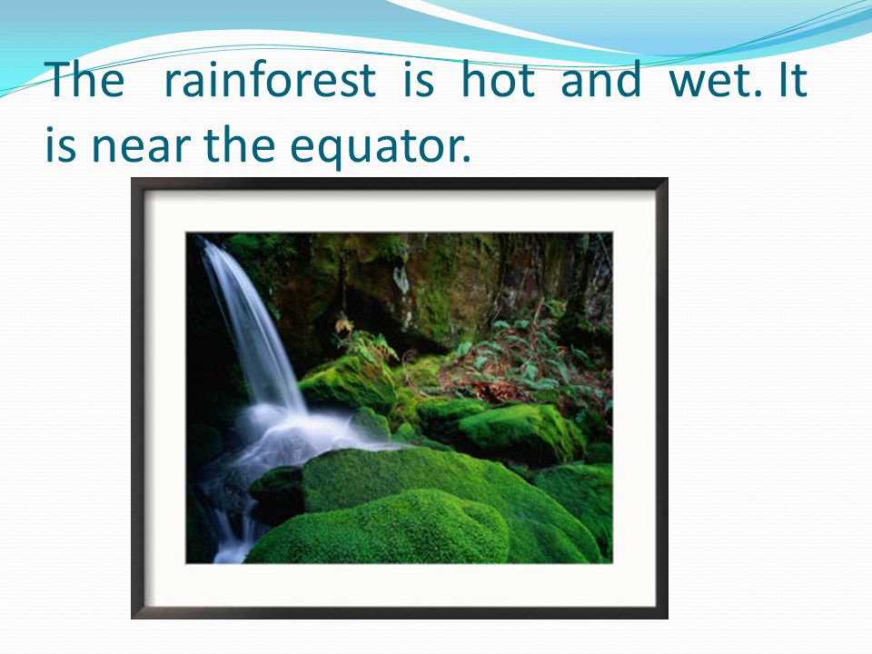 The rainforest has lots of trees.