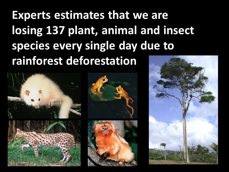 Experts estimates that we are losing 137 plant, animal and insect species every single day due to rainforest deforestation.