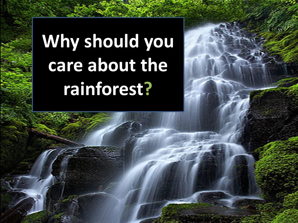 Why should you care about the rainforest