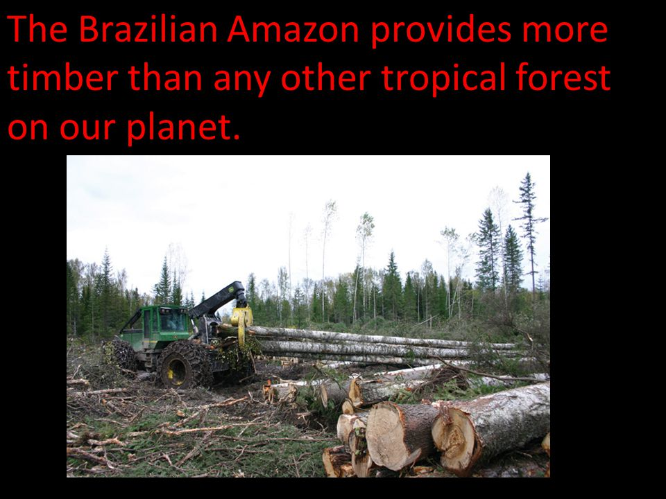 The Brazilian Amazon provides more timber than any other tropical forest on our planet.