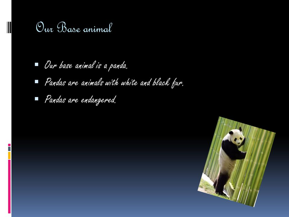 Our Base animal  Our base animal is a panda. Pandas are animals with white and black fur.