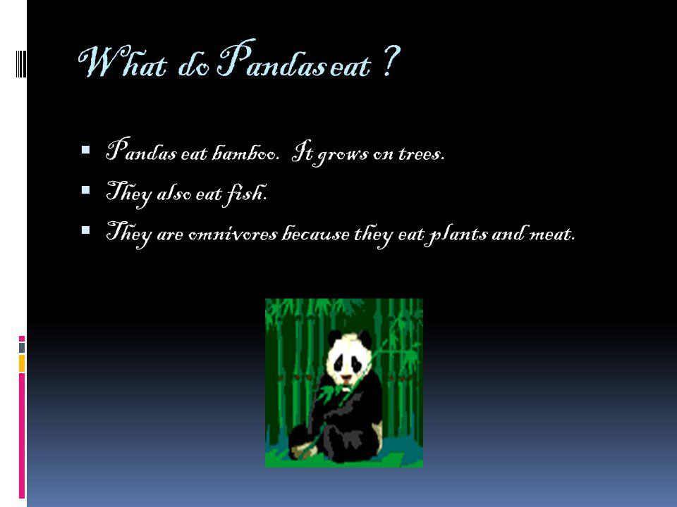 What do Pandas eat . Pandas eat bamboo. It grows on trees.