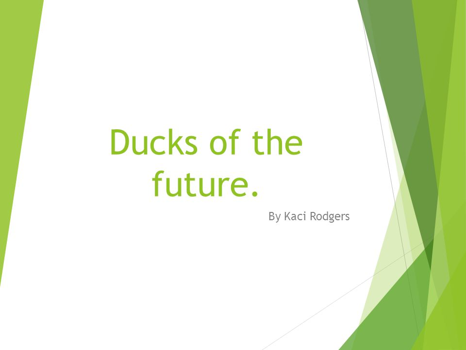 Ducks of the future. By Kaci Rodgers