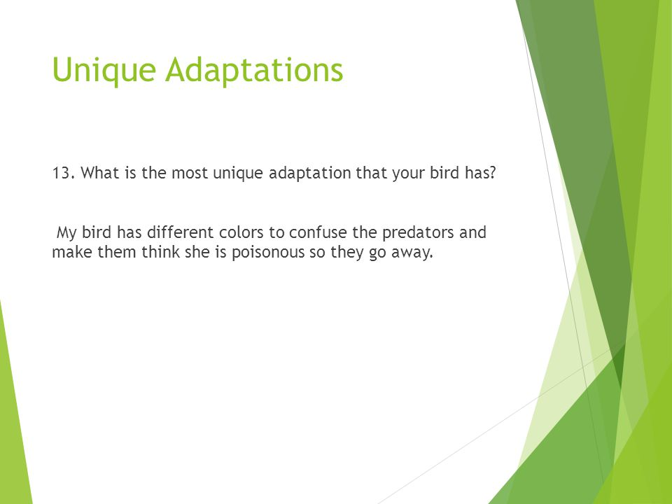 Unique Adaptations 13. What is the most unique adaptation that your bird has? My bird has different colors to confuse the predators and make them thin