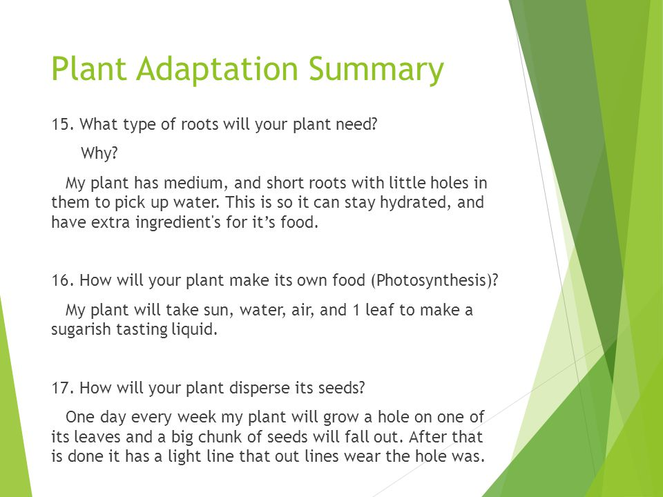 Plant Adaptation Summary 15. What type of roots will your plant need? Why? My plant has medium, and short roots with little holes in them to pick up w
