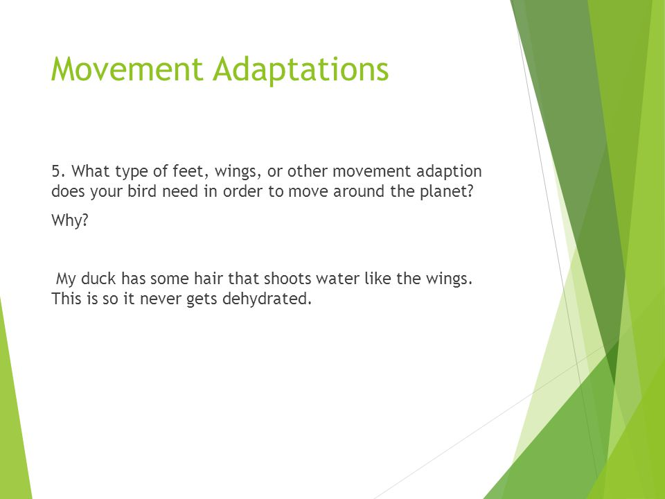 Movement Adaptations 5. What type of feet, wings, or other movement adaption does your bird need in order to move around the planet? Why? My duck has