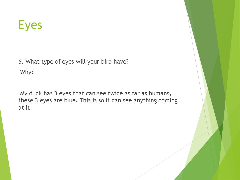 Eyes 6. What type of eyes will your bird have? Why? My duck has 3 eyes that can see twice as far as humans, these 3 eyes are blue. This is so it can s