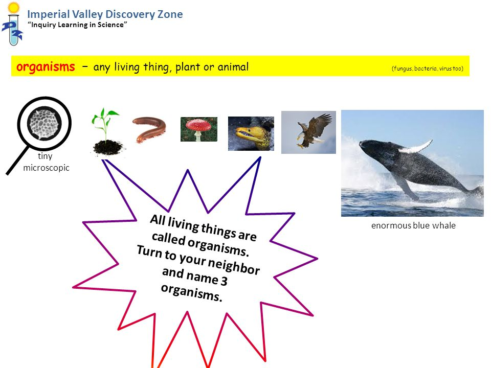 organisms – any living thing, plant or animal (fungus, bacteria, virus too) Imperial Valley Discovery Zone Inquiry Learning in Science All living things are called organisms.