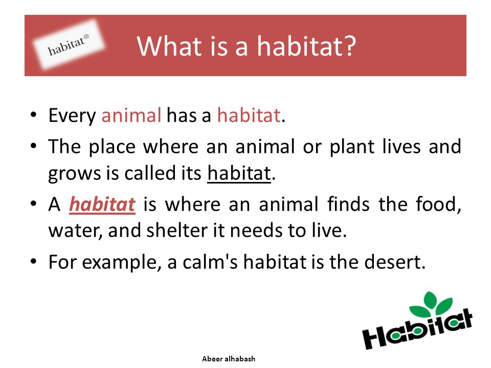 What is a habitat? Every animal has a habitat. The place where an animal or plant lives and grows is called its habitat. A habitat is where an animal